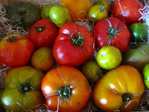 tomates21